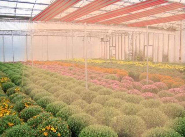 Принцип работы напоминает обогрев солнечным светом. Прибор создает естественную для растений атмосферу, температура не опускается ниже +5°С