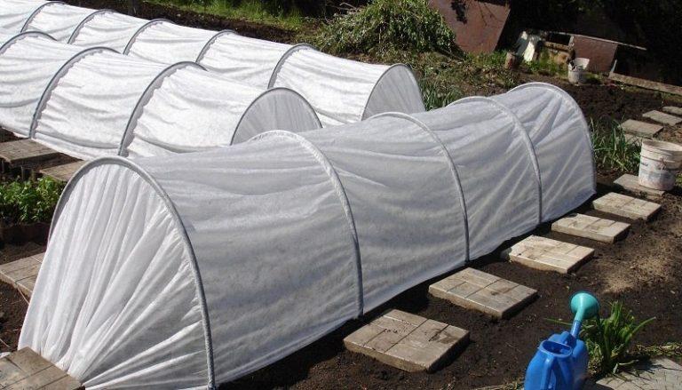 В целом, необходимость в применении парников возникает весной, когда нужно защитить рассаду от заморозков, прямых лучей солнца или ветра и дождей