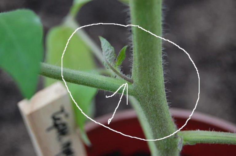 При правильном осуществлении операции растения получат все необходимые им вещества в достаточном для развития количестве