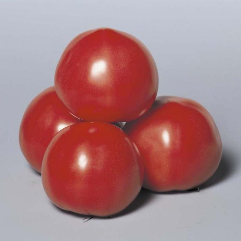 Пинк Парадайз F1 все больше занимает лидирующие позиции среди других сортов томатов