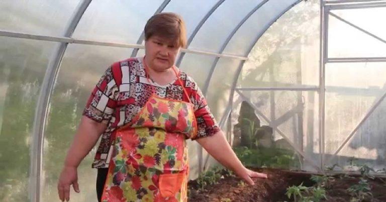 кептический настрой Юлии Миняевой к подкормке рассады обусловлен простой логикой. Опытный садовод советует зрителям не допускать перероста томатов