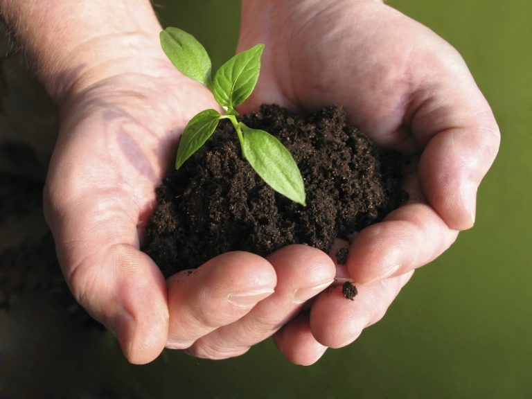 Органические подкормки, в отличие от минеральных удобрений применяется всегда, независимо от состава грунта и скорости роста культуры
