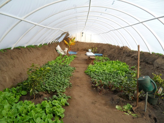 Подземная теплица относится, пожалуй, к незаслуженно обделенным вниманием сооружениям для круглогодичного выращивания овощей