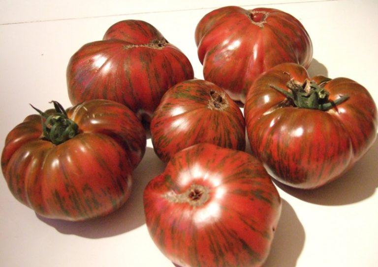 Американский специалист по селекции Дж. Сайгел вывел его путем скрещивания двух томатов