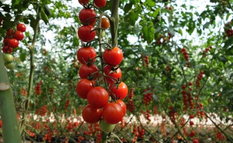 Высокие растения требуют опоры для нормального развития