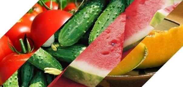 Сочный помидор — это фрукт или овощ?