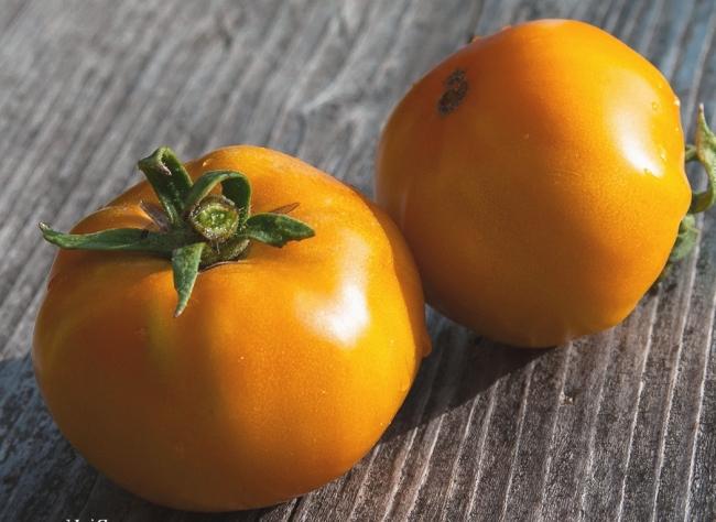 Еще одним явным достижением селекции являются крупноплодные сорта, отличающиеся желтым цветом созревших плодов