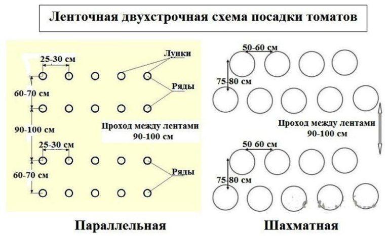 Схема посадки помидор в теплице из поликарбоната формируется в зависимости от разных факторов, в том числе и от параметров самого строения