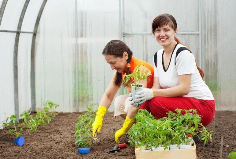 хема посадки томатов в теплице 3х6 представляет собой набор вариантов рационального распределения помидор на относительно меленьком участке