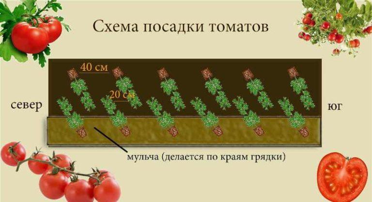 У стенок нужно сажать томаты солнцелюбивые и низкорослые