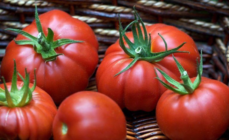 Данный вид томата создан для выращивания не только в тепличных условиях, но и в открытом грунте
