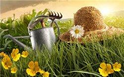 В мае у дачников начинаются хлопотные дни в садах и огородах