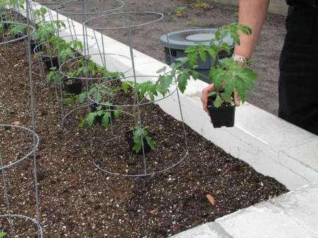 В весеннюю страду важно знать, на каком расстоянии сажать рассаду или семена