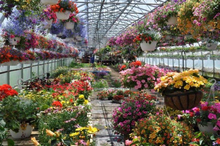 Способы выращивания цветов в теплице самые различные. Это могут быть семена, луковицы, клубни и другие варианты