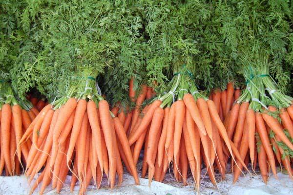 В середине сентября осуществляется сбор моркови