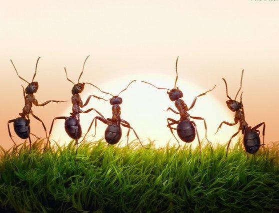 Если в муравейнике много муравьев, лето будет теплым