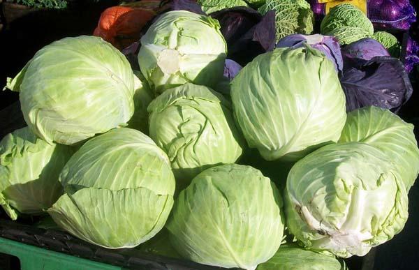 В начале сентября в саду и огороде пристальное внимание следует уделить сбору капусты различных видов