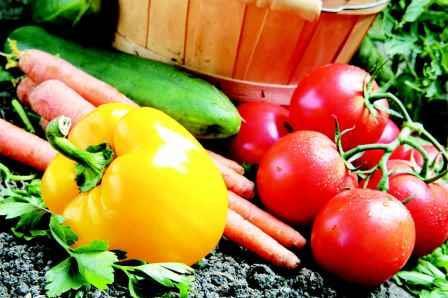 Что сажать после помидор на следующий год