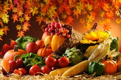В сентябре на дачном участке осуществляется сбор урожая