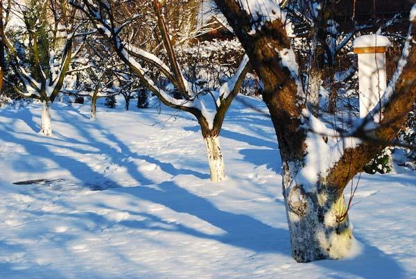 Первоочередная задача для садовода в феврале – накопить на участке много снега
