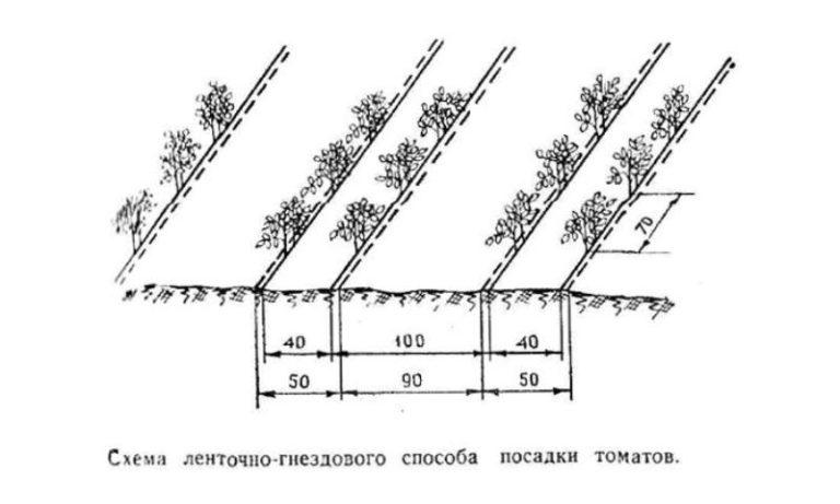 перец схема посадки