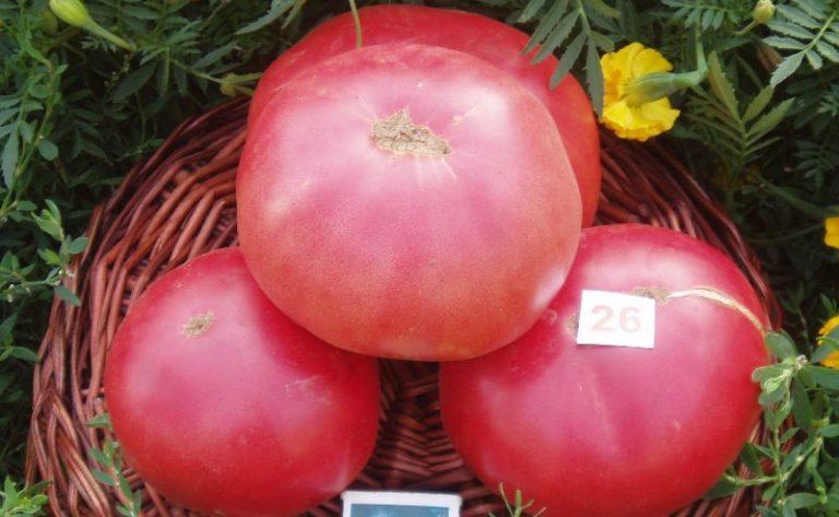 Розовый гигант и Матрешка F1 образуют большие розовые плоды сплющенной формы с приятным вкусом