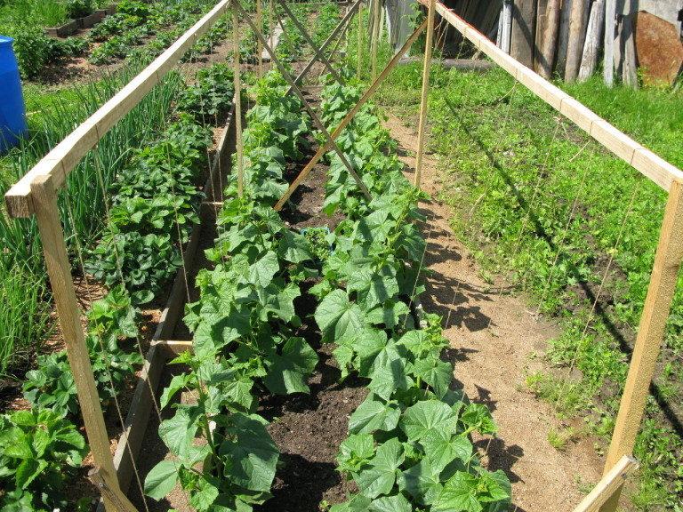 Кроме подкормки, полива, именно такие простые конструкции улучшают развитие этих растений