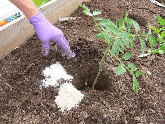Требуется приобрести специальный препарат для удобрения помидоров с содержанием такого компонента и внести его в грунт согласно инструкции