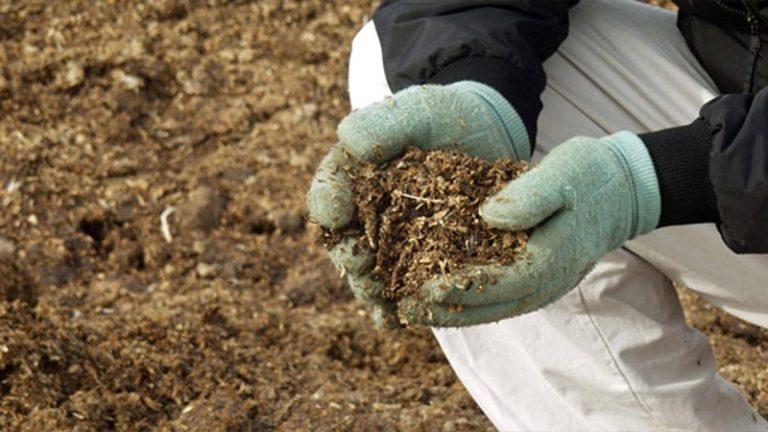 Недостача питательных веществ в грунте, в основном это отсутствие калия