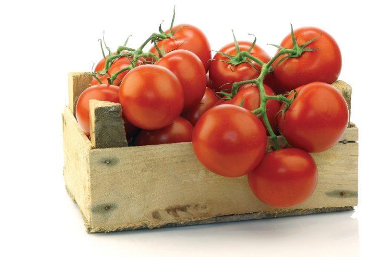 Хранить урожай помидор для дозревания нужно с удаленными плодоножками в деревянных ящиках в один слой, обеспечивая требуемую температуру и доступ к солнечному свету