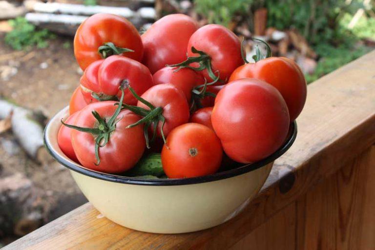 Ажур и Буржуй имеют относительно большие плоды, обладающие плотной сочной мякотью красного цвета