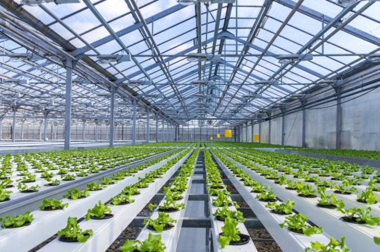 На сегодняшний день такие конструкции позволяют получить урожай овощей, зелени и фруктов в закрытом пространстве