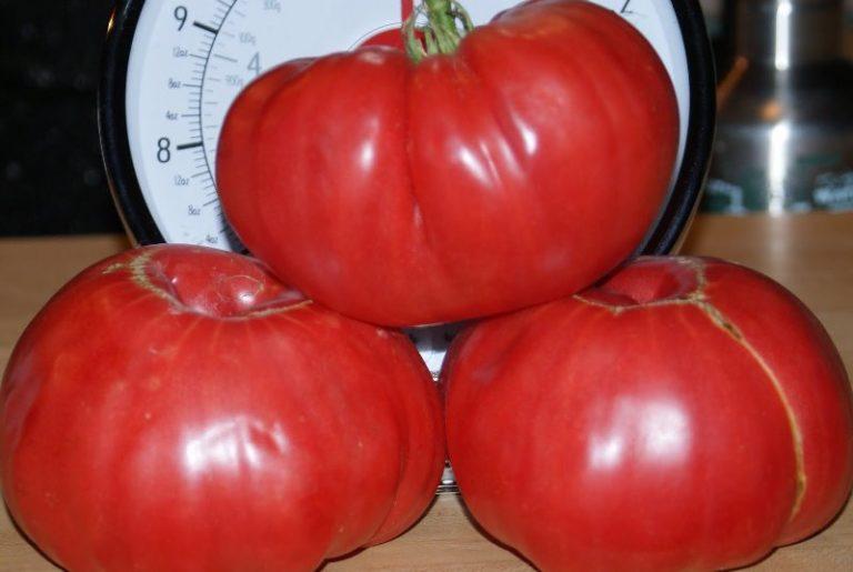 Плоды сочные, мясистые, с малым количеством семян, весом от 170 до 300 г.