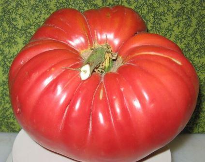 Из крупноплодных и раннеспелых сортов стоит обратить внимание на томат Сто пудов