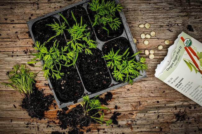 С 3 по 11 и 30- 31 января можно высаживать растения со съедобными листьями
