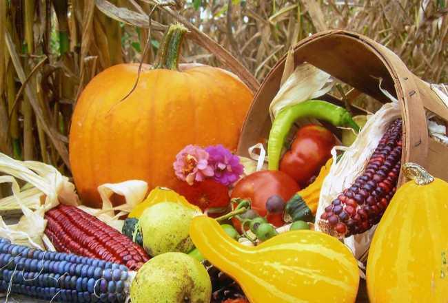 Основной сбор урожая приходится на сентябрь