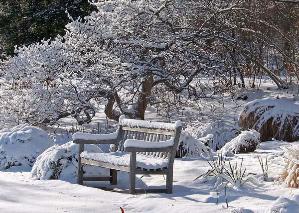 Обязательной процедурой в начале декабря является и уборка при необходимости мокрого снега с веток деревьев