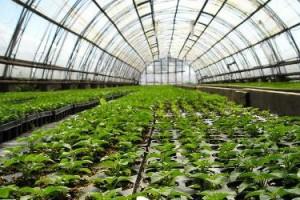 На сегодняшний день в России тепличные хозяйства набирают все большую популярность