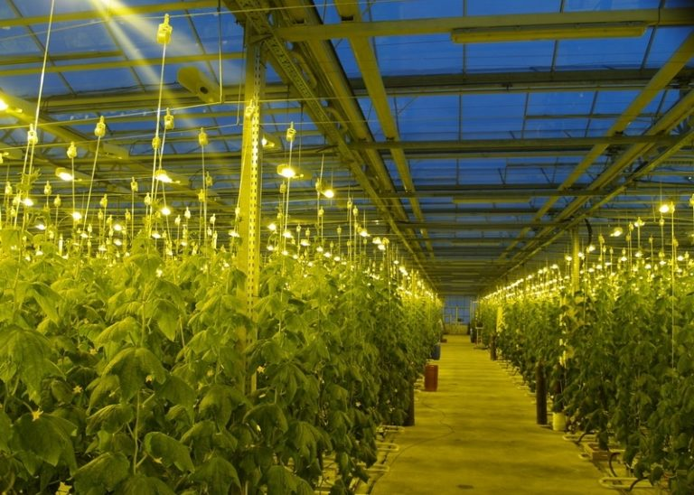 Оборудование для тепличного хозяйства включает в себя освещение, полив и необходимые инструменты