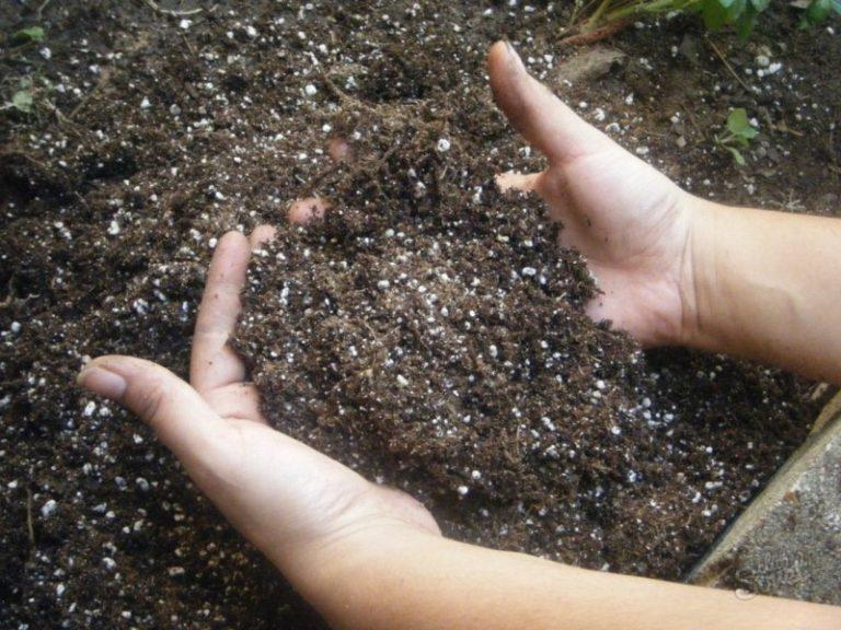 Можно использовать и другие минеральные удобрения, которые обогащают почву минеральными веществами