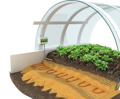 Некоторые высаживают растения прямо в грунт, обустраивая в этих местах теплицы с подогревом
