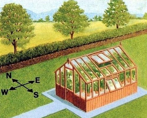 Владение информацией о том, как расположить теплицу по сторонам света, позволяет создать оптимальные условия для произрастания зеленых насаждений