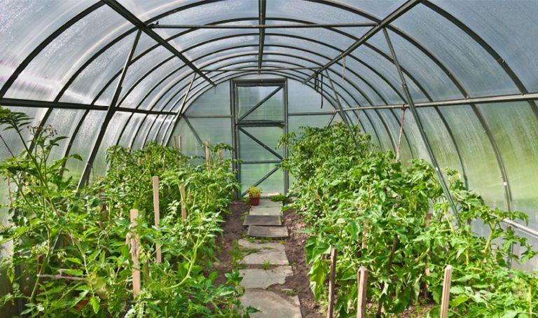 Хороший урожай обеспечит садоводу правильно возведенная теплица