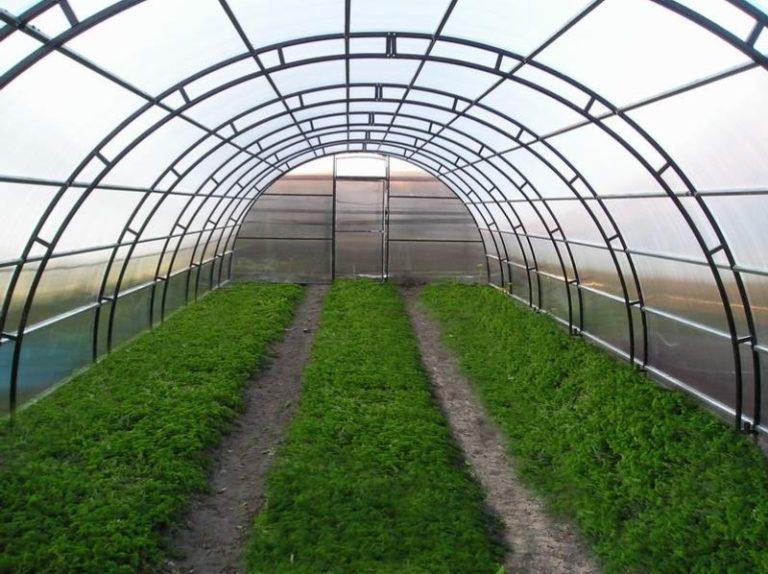 Арочная теплица — ее конструкция считается оптимальной при выращивании низкорослых растений