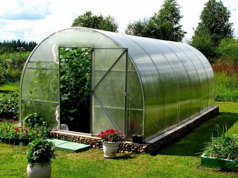 Парники и теплицы предназначены для выращивания овощей, зелени и других растений в течение круглого года вне зависимости от погодных условий