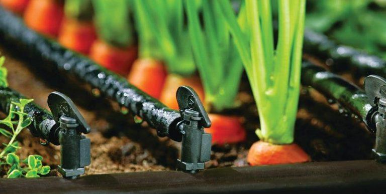 Капельные системы для огорода относятся к недорогим видам поливных систем
