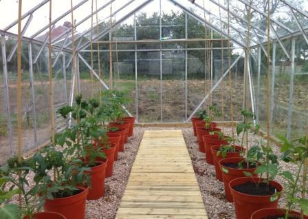 Многих интересует вопрос о том, когда высаживать помидоры в теплицу в Сибири