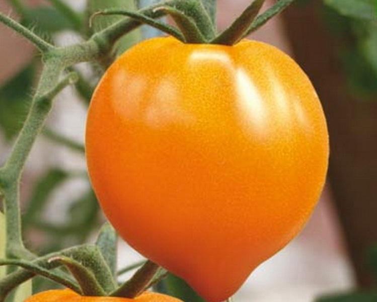 Такие помидоры с большим удовольствием употребляют не только взрослые, но и дети