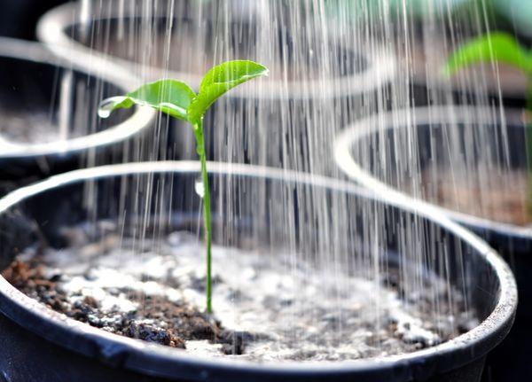 Прежде чем выращивать перец, стоит позаботиться о первостепенных мероприятиях — подготовка почвы и оросительной системы