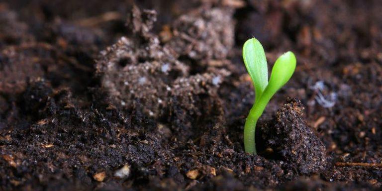 Садоводы со стажем рекомендуют уже на этапе посадки семян делать необходимую основу для активного роста огурцов